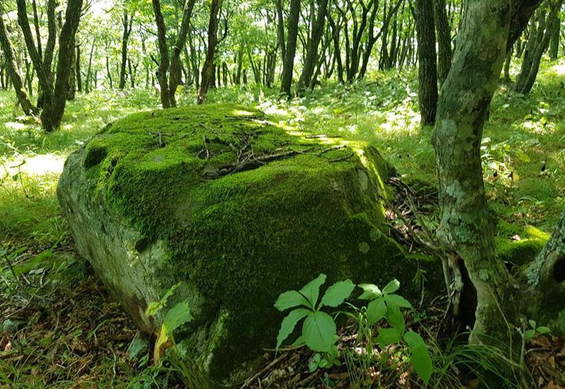 森の中の苔に覆われた岩
