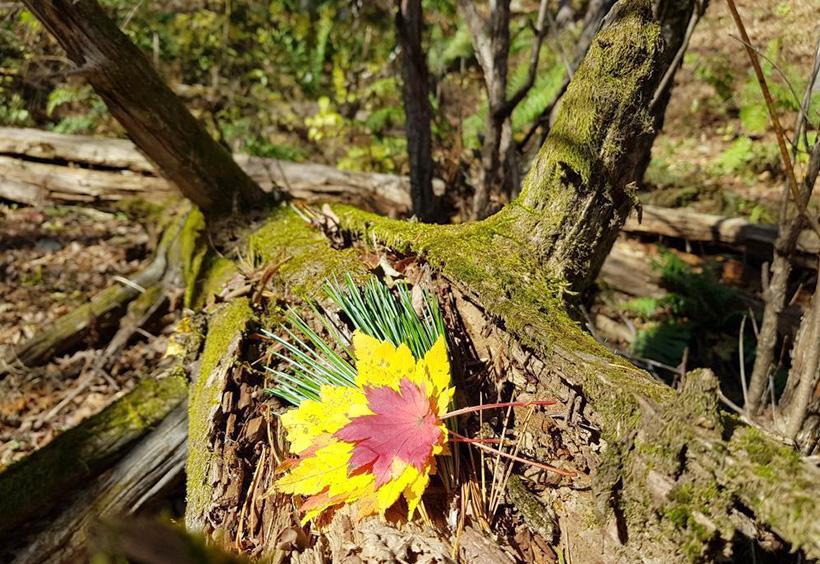 黄色と赤の葉
