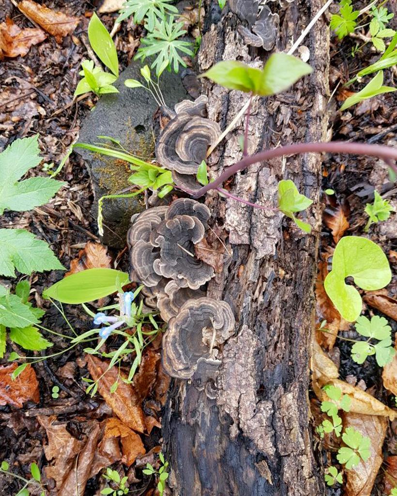 森に生えているキノコ