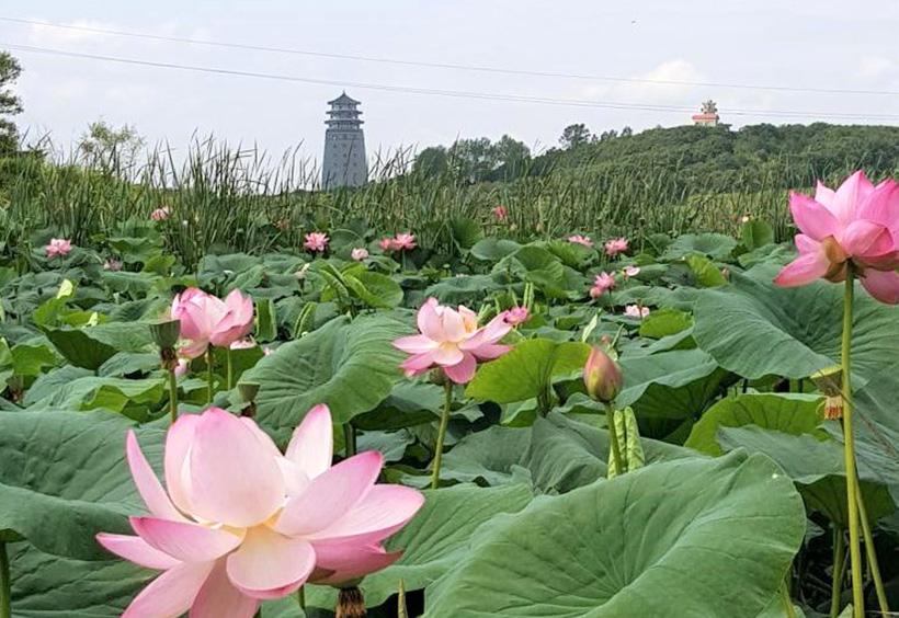 蓮池の向こうに見える中国の国境展望台